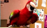 Dance Like no Parrot is Watching